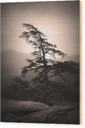 Chimney Rock Lone Tree In Sepia Wood Print