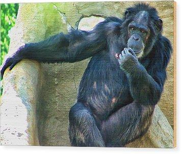 Wood Print featuring the photograph Chimp 1 by Dawn Eshelman