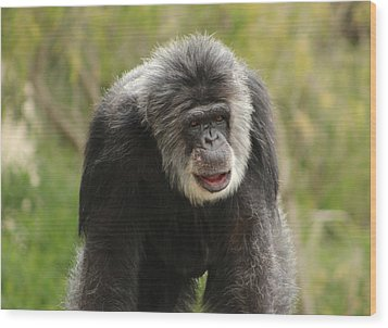 Chimpanzee Wood Print