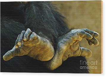 Chimpanzee Feet Wood Print by Clare Bevan