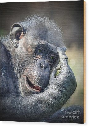 Wood Print featuring the photograph Chimpanzee Thinking by Savannah Gibbs