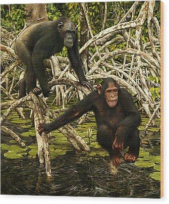 Chimpanzees In Mangrove Wood Print by Owen Bell