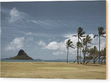 Chinaman's Hat Island Wood Print by Joanna Madloch
