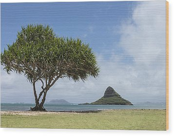 Chinamans Hat With Tree - Oahu Hawaii Wood Print by Brian Harig
