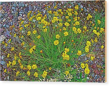 Chinchweed In Big Bend National Park-texas Wood Print