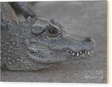 Chinese Alligator Wood Print by Ruth Jolly