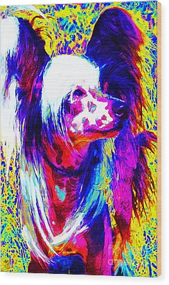 Chinese Crested Dog 20130125v1 Wood Print by Wingsdomain Art and Photography