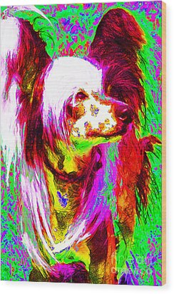 Chinese Crested Dog 20130125v2 Wood Print by Wingsdomain Art and Photography