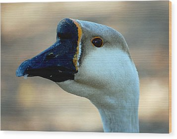 Chinese Goose Wood Print by Lisa Phillips