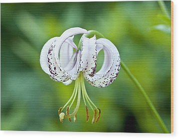 Wood Print featuring the photograph Chinese Lily by Lana Enderle