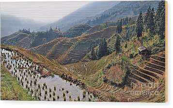 Chinese Rice Terraces Wood Print by Alexandra Jordankova
