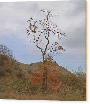 Chino Hills Tree Wood Print by Ben and Raisa Gertsberg