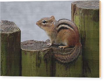 Wood Print featuring the photograph Chipmunk by Kathy Gibbons