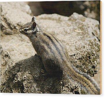 Chipmunk On A Rock Wood Print by Belinda Greb