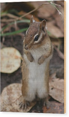 Wood Print featuring the photograph Chipmunk by Paula Brown