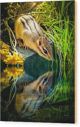 Chipmunk Reflection Wood Print by Bob Orsillo