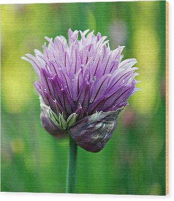 Chive Blossom Wood Print