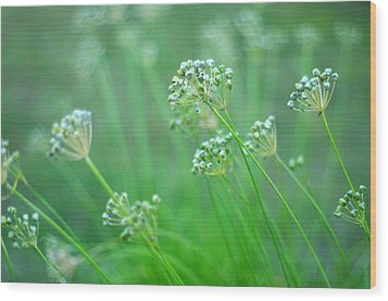 Wood Print featuring the photograph Chive Garden by Suzanne Powers