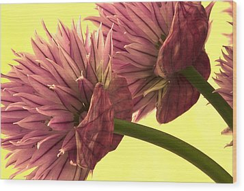Chive Macro Beauty Wood Print by Sandra Foster