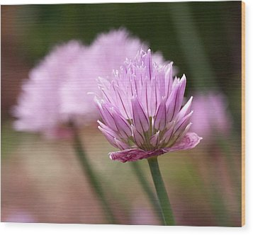 Chives Wood Print by Rona Black