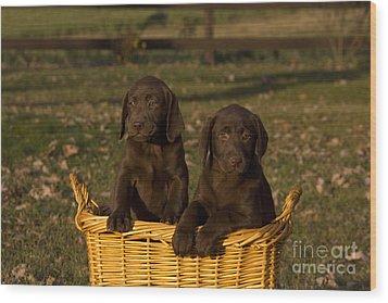 Chocolate Labrador Retriever Pups Wood Print by Linda Freshwaters Arndt