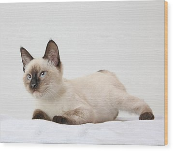 Chocolate Point Siamese Wood Print