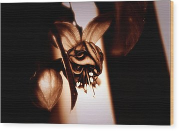 Wood Print featuring the photograph Chocolate Silk Fuchsia by Jeanette C Landstrom
