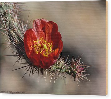 Wood Print featuring the photograph Cholla Cactus by Elaine Malott