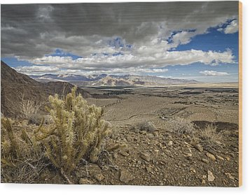 Cholla View Wood Print