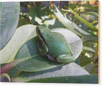 Chorus Frog On A Rhodo Wood Print