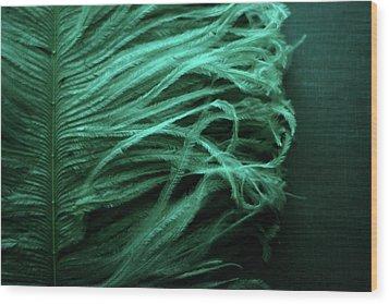 Chorus Lines Wood Print by Rebecca Sherman
