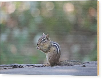 Chowing Chipmunk Wood Print