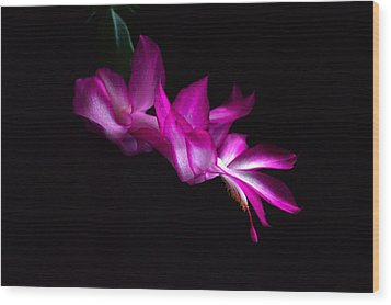 Wood Print featuring the photograph Christmas Cactus Blossom by Bill Swartwout