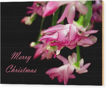 Christmas Cactus Greeting Card Wood Print by Carolyn Marshall