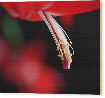 Christmas Cactus Pistil And Stamens Wood Print by Rona Black
