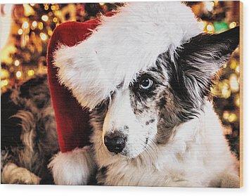 Christmas Cardigan Wood Print by Cathy Donohoue
