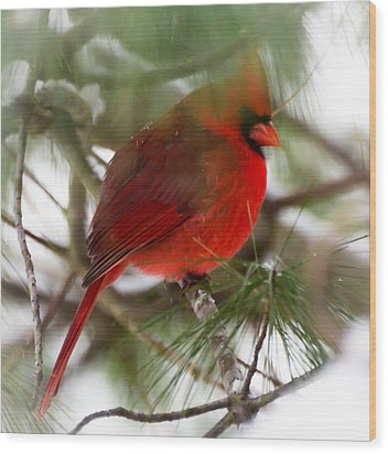 Wood Print featuring the photograph Christmas Cardinal by Kerri Farley