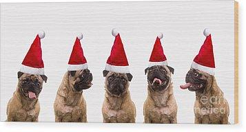 Christmas Caroling Dogs Wood Print by Edward Fielding