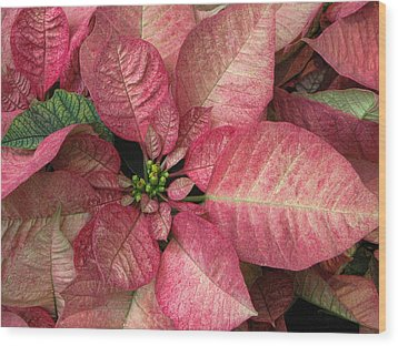 Wood Print featuring the photograph Christmas Flower by Tammy Espino
