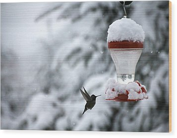 Christmas Hummingbird Wood Print