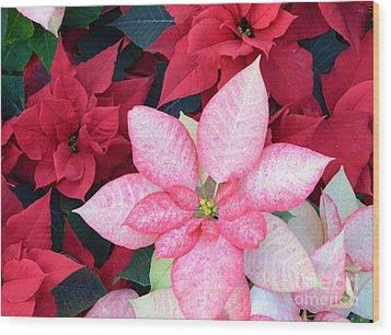 Christmas Pointsettia Wood Print by Kathleen Struckle