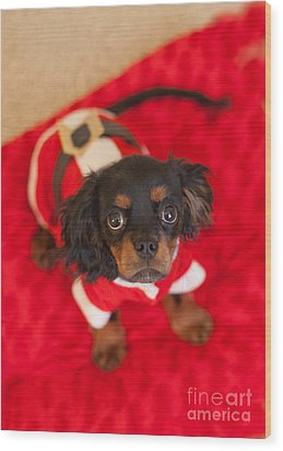 Christmas Puppy Wood Print by Kay Pickens