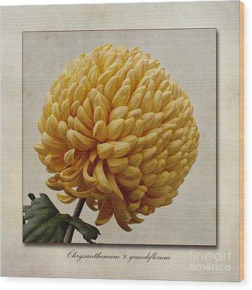 Chrysanthemum Grandiflorum Yellow Wood Print by John Edwards