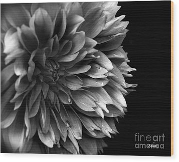 Chrysanthemum In Black And White Wood Print by Eena Bo