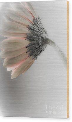 Chrysanthemum Petals 1 Wood Print