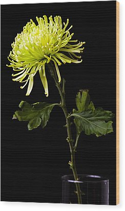 Wood Print featuring the photograph Chrysanthemum by Sennie Pierson