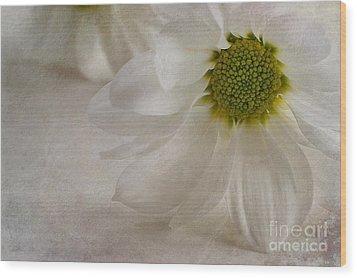 Chrysanthemum Textures Wood Print by John Edwards