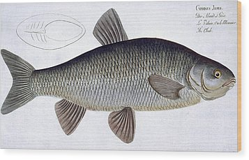 Chub Wood Print by Andreas Ludwig Kruger