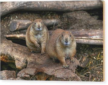 Chubby Pair Wood Print by Larry Trupp