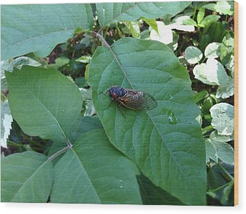Cicada Invasion Wood Print